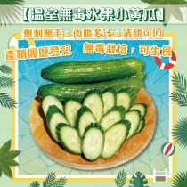 (6/1起陸續出貨)【田蜜心果園】24盒溫室無毒水果小黃瓜